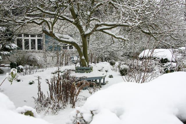 cura del giardino e dell'orto in inverno
