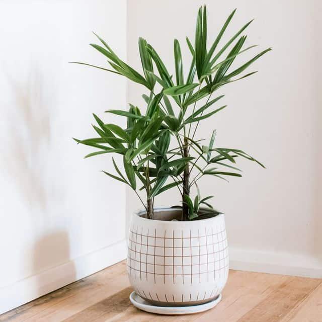 piante di tendenza