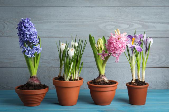 come scegliere miglior vaso per le piante