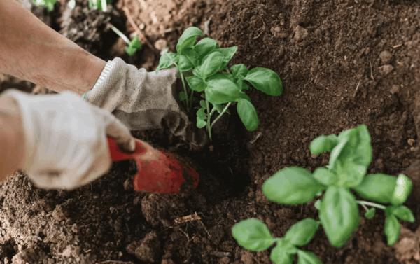 Cosa piantare in agosto