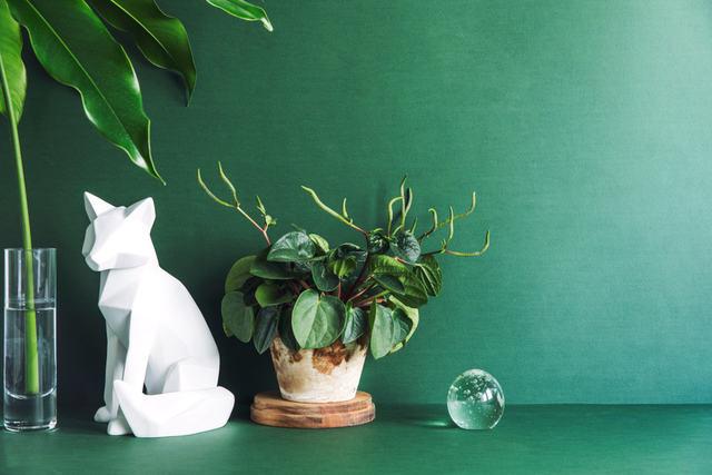 decorazioni green per l'ufficio
