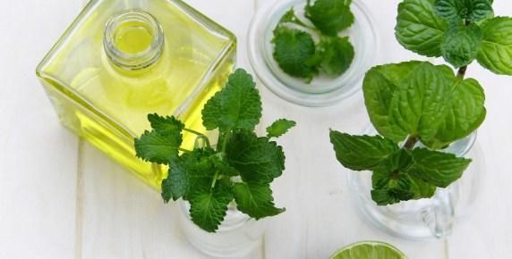 5 Meilleures plantes contre la fatigue