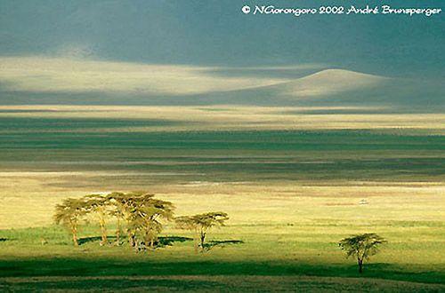 Tanzanie safari guide