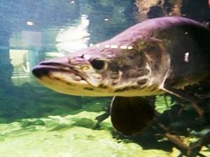 aquarium porte dorée0113