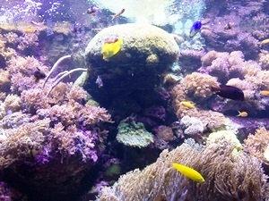 aquarium porte dorée0129