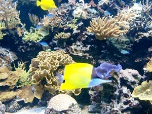 aquarium porte dorée0134