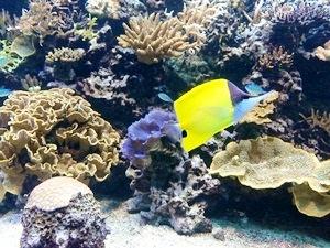 aquarium porte dorée0135