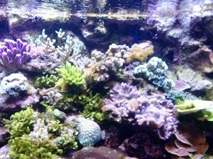 aquarium porte dorée0136