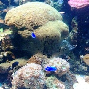 aquarium porte dorée0153