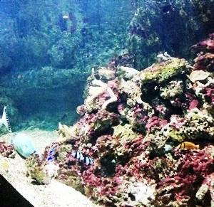 aquarium porte dorée0160