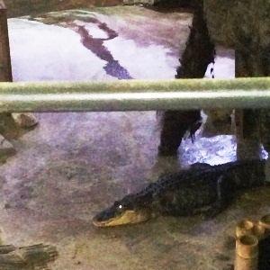 aquarium porte dorée0168
