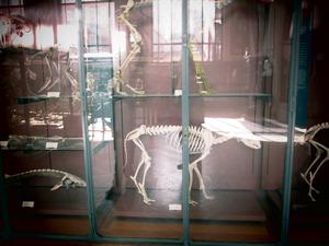 galerie d'anatomie comparée et de paléontologie03
