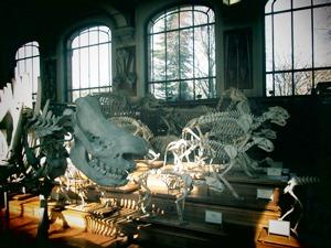 galerie d'anatomie comparée et de paléontologie05