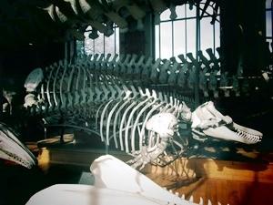galerie d'anatomie comparée et de paléontologie15