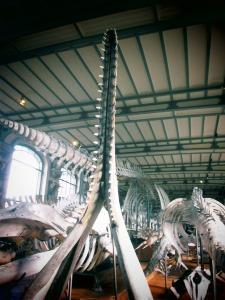 galerie d'anatomie comparée et de paléontologie17