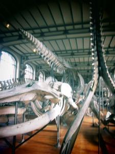 galerie d'anatomie comparée et de paléontologie18