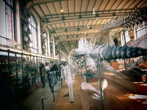 galerie d'anatomie comparée et de paléontologie19