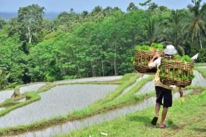 guide thailande indonesie riviere