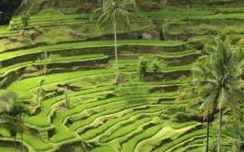 guide thailande indonesie riziere de bali