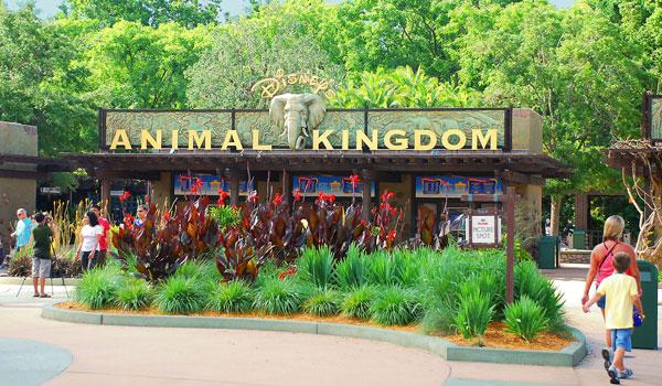 Animal Kingdom - Disney Guide