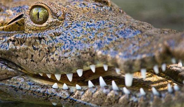 Det Vilde Florida dyreliv