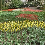 Day excursions: Keukenhof