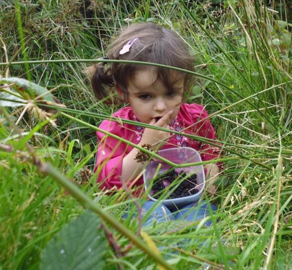 20150909 sarah blackberry picking P1010069