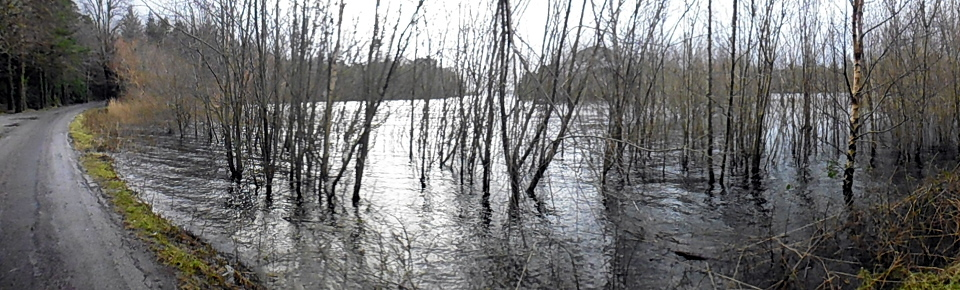 swamp P1010368