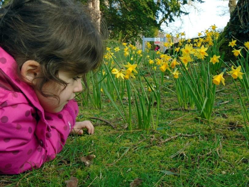 sarah & Daffodils DSC00007