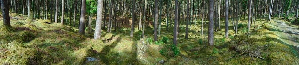 tree panorama DSC00149