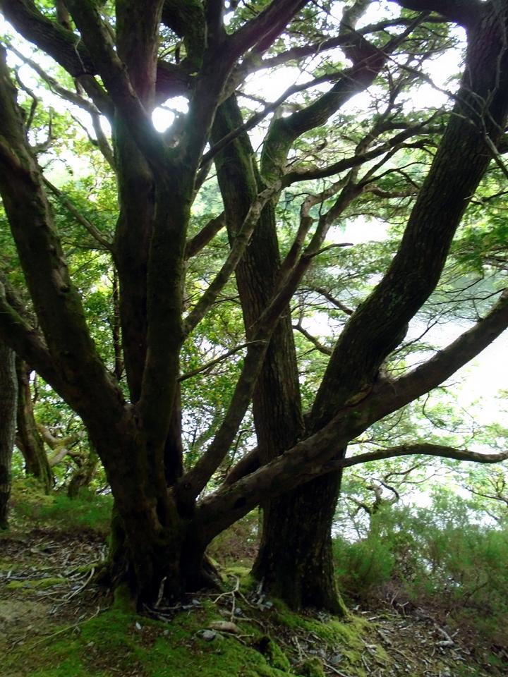 DSC00600married trees