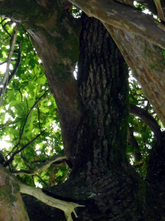 DSC00605married tree