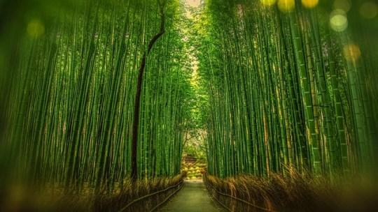 Quelques sites à visiter lors de votre voyage au Japon