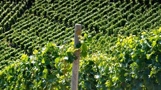 Tout savoir sur les vins de Jura