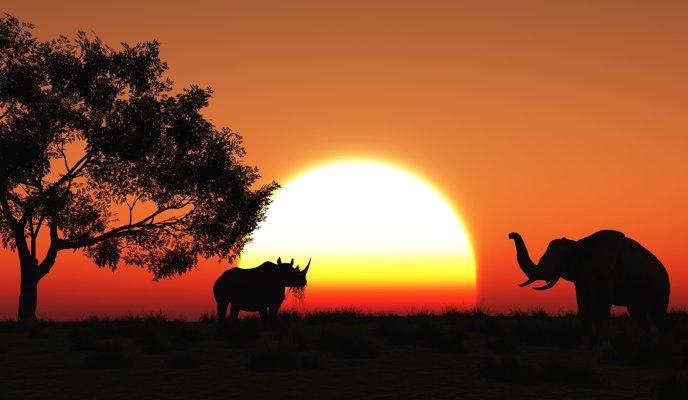 Partir en Afrique pour faire  du safari: laissez-vous tenter