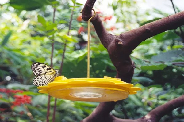 13 Diys To Make A Butterfly Feeder Guide Patterns