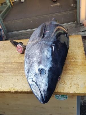 cutting tuna