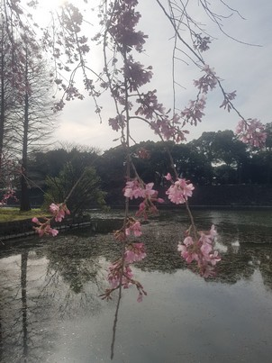 Tokyo Imperial Palace 4