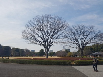 Tokyo Imperial Palace beauty