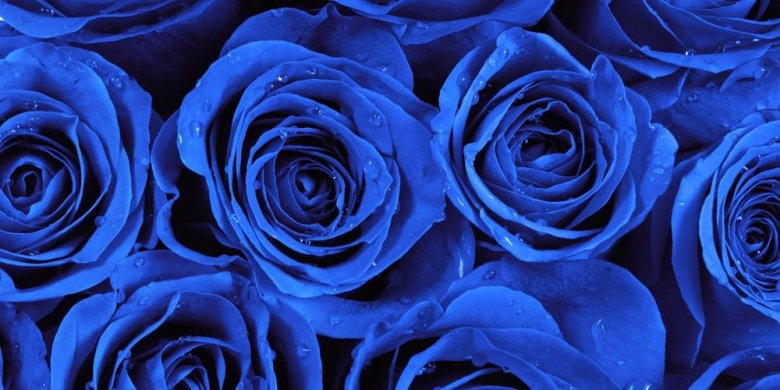 valentines-blue-roses