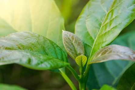 Plant a flower day - Avocado tree