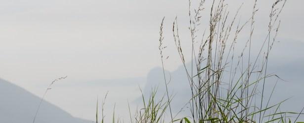 Anche i fili d'erba ammirano il Garda
