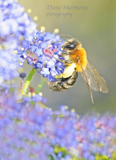 Bee taking pollen web