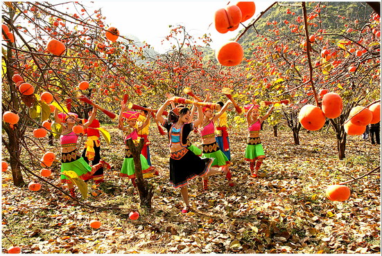 Autumn harvest of Gongcheng Persimmon,Guilin