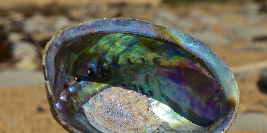 La nacre présente à l'intérieur d'une coquille d'ormeau.