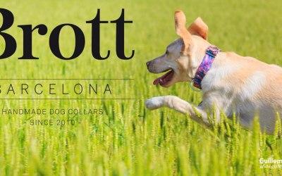 Fotografiando perros con collares Brott