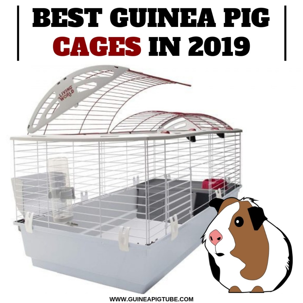 Best Guinea Pig Cages In 2019