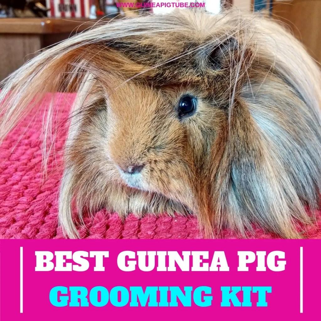 Best Guinea Pig Grooming Kit