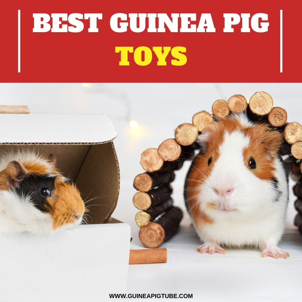 Best Guinea Pig Toys A Helpful Guide