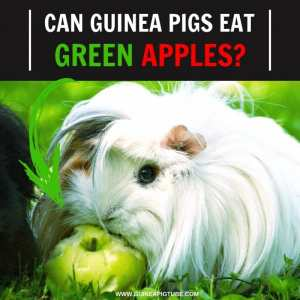 Can Guinea Pigs Eat Green Apples
